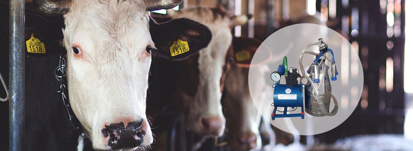 Dairy Automatic Milking Machine Manufacturer & Supplier