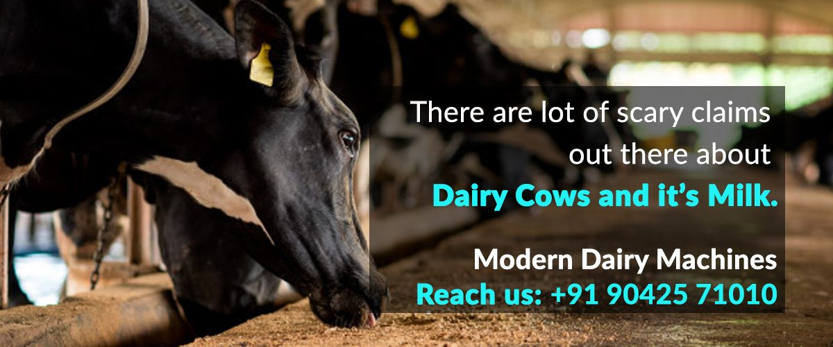 WOW Facts about Dairy cattle - Blog   Modern Dairy Machines